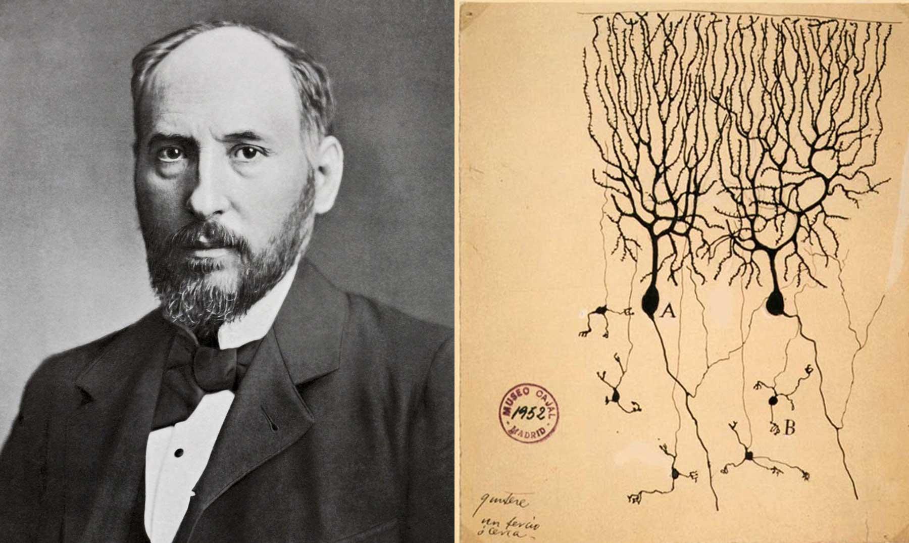 El artista de la neurona: Ramón y Cajal