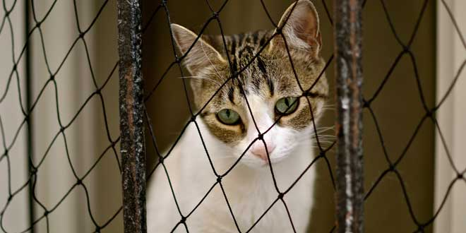tristeza gatito