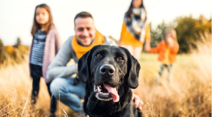 Por qué el perro es el mejor amigo del hombre