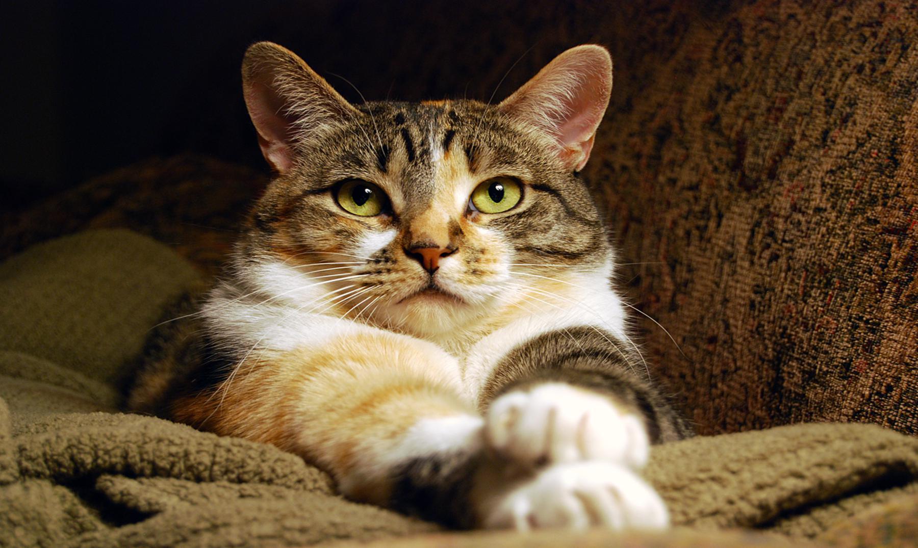 Puddicat, el gato que hace de guía de un perro ciego