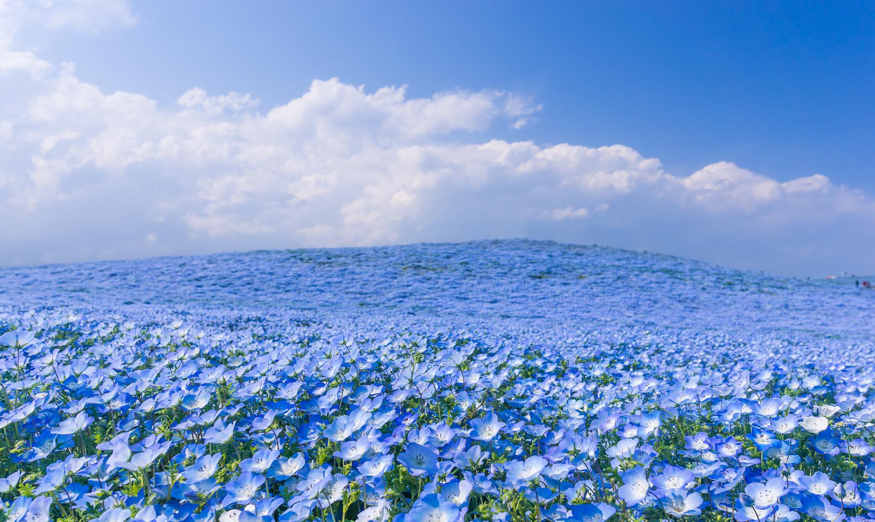 El increíble paraíso del parque Hitashi de Japón