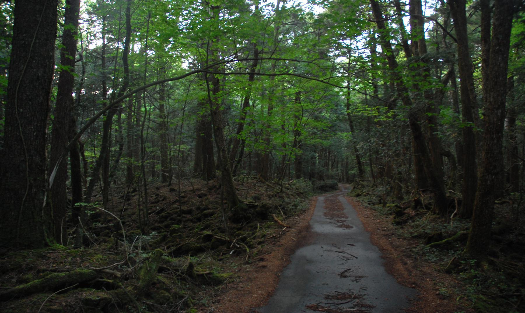 Aokigahara: El bosque de los suicidios de Japón