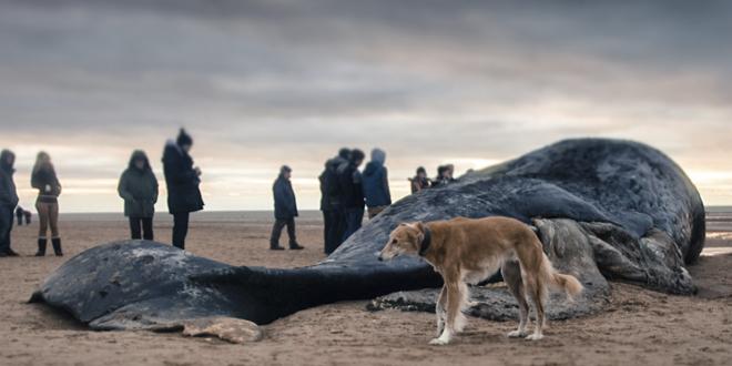 ballena cazada