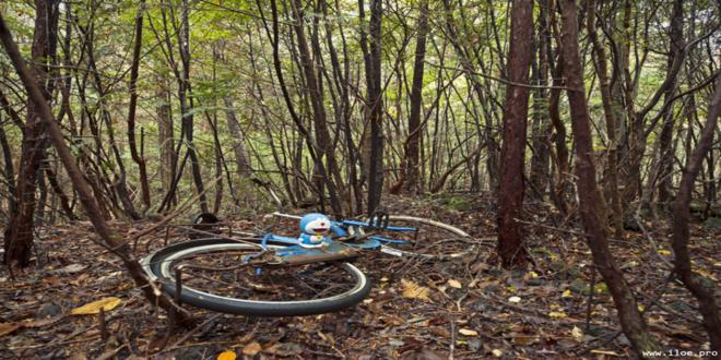 bosque de los suicidios, bosque de aokigahara, japón