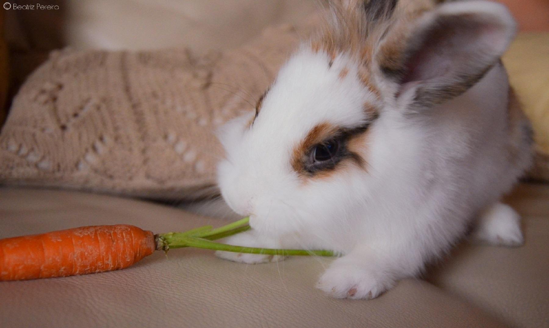 Las Zanahorias No Son Buenas Para Los Conejos Una zanahoria es una zanahoria, y no sabemos nada más. las zanahorias no son buenas para los