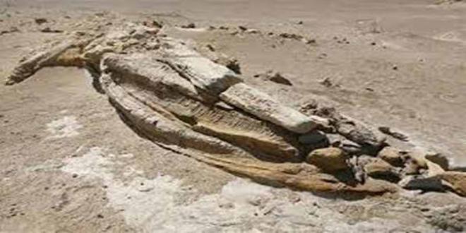 fosil-pinguinogigante_660x330