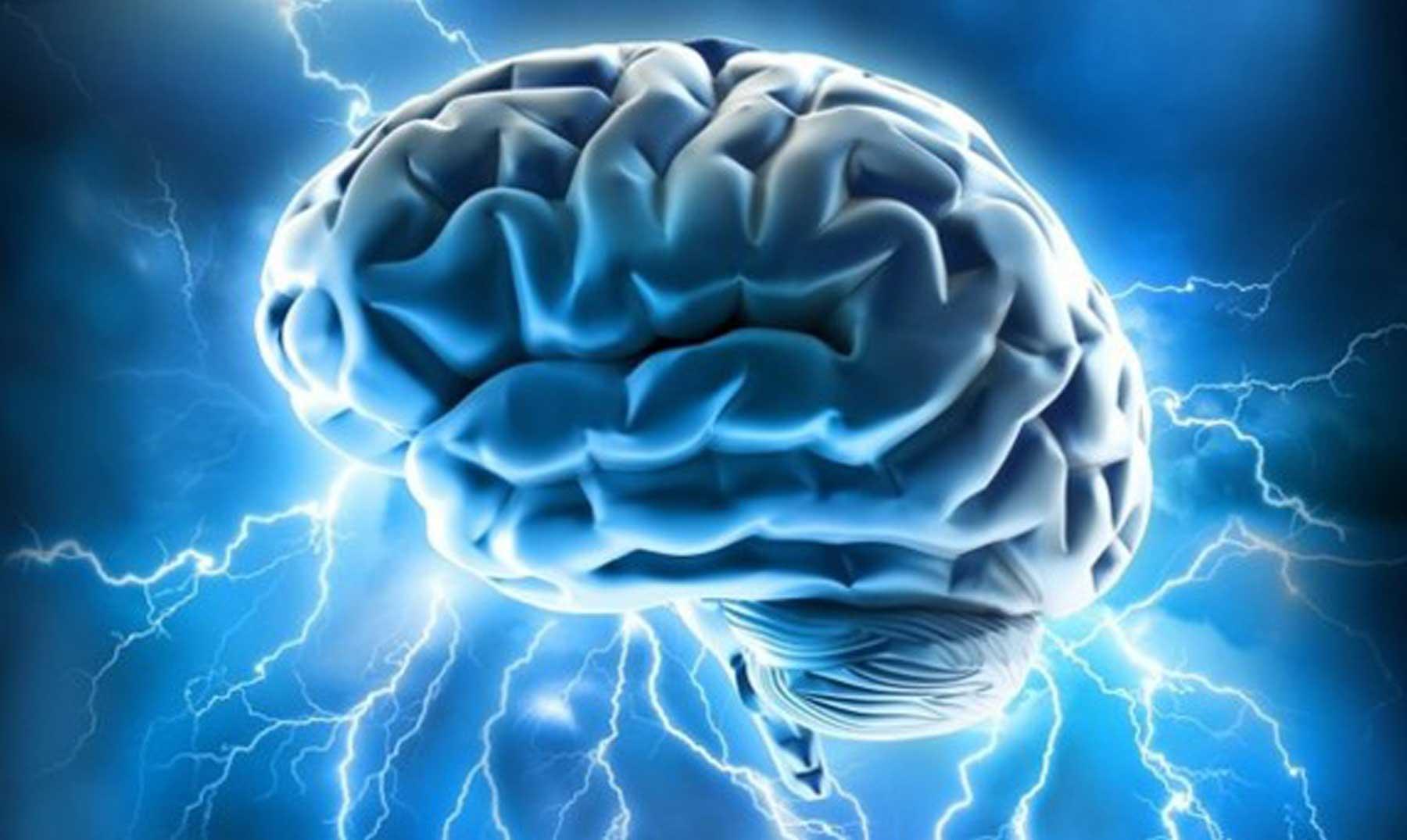 Científicos logran implantar memoria artificial en un cerebro vivo