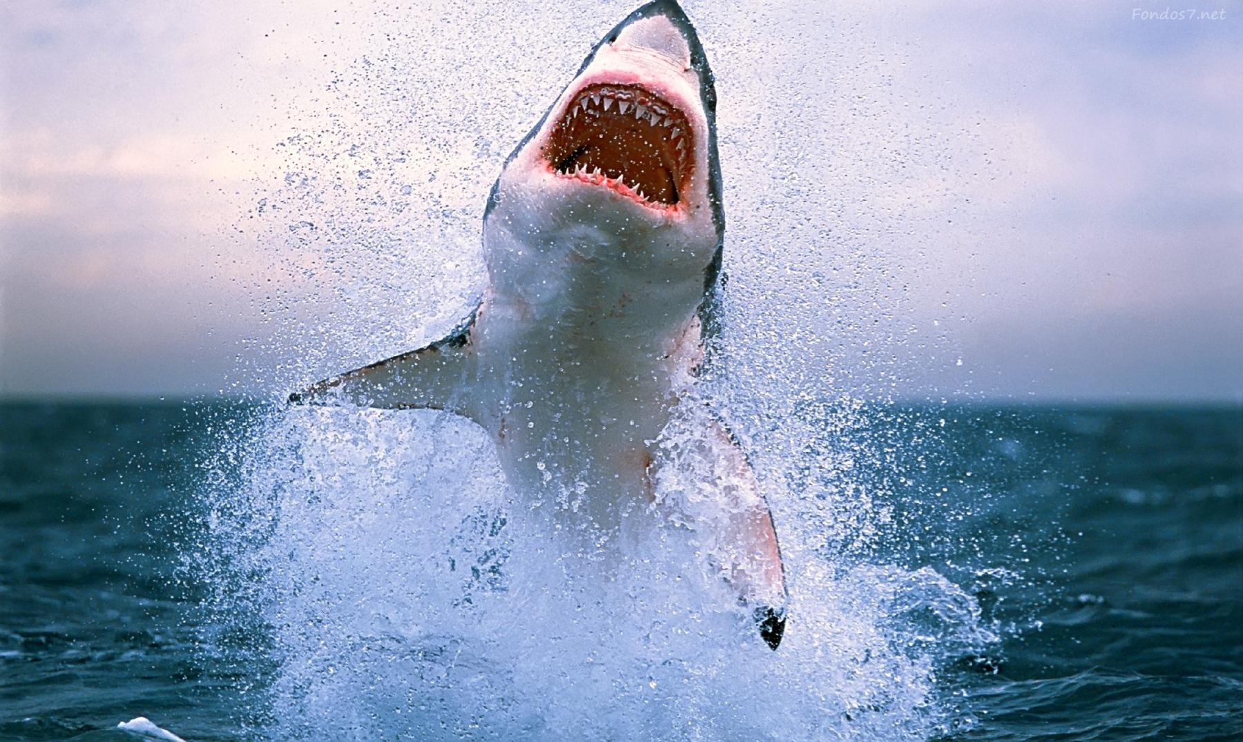 La cara oculta de los tiburones que no conocías