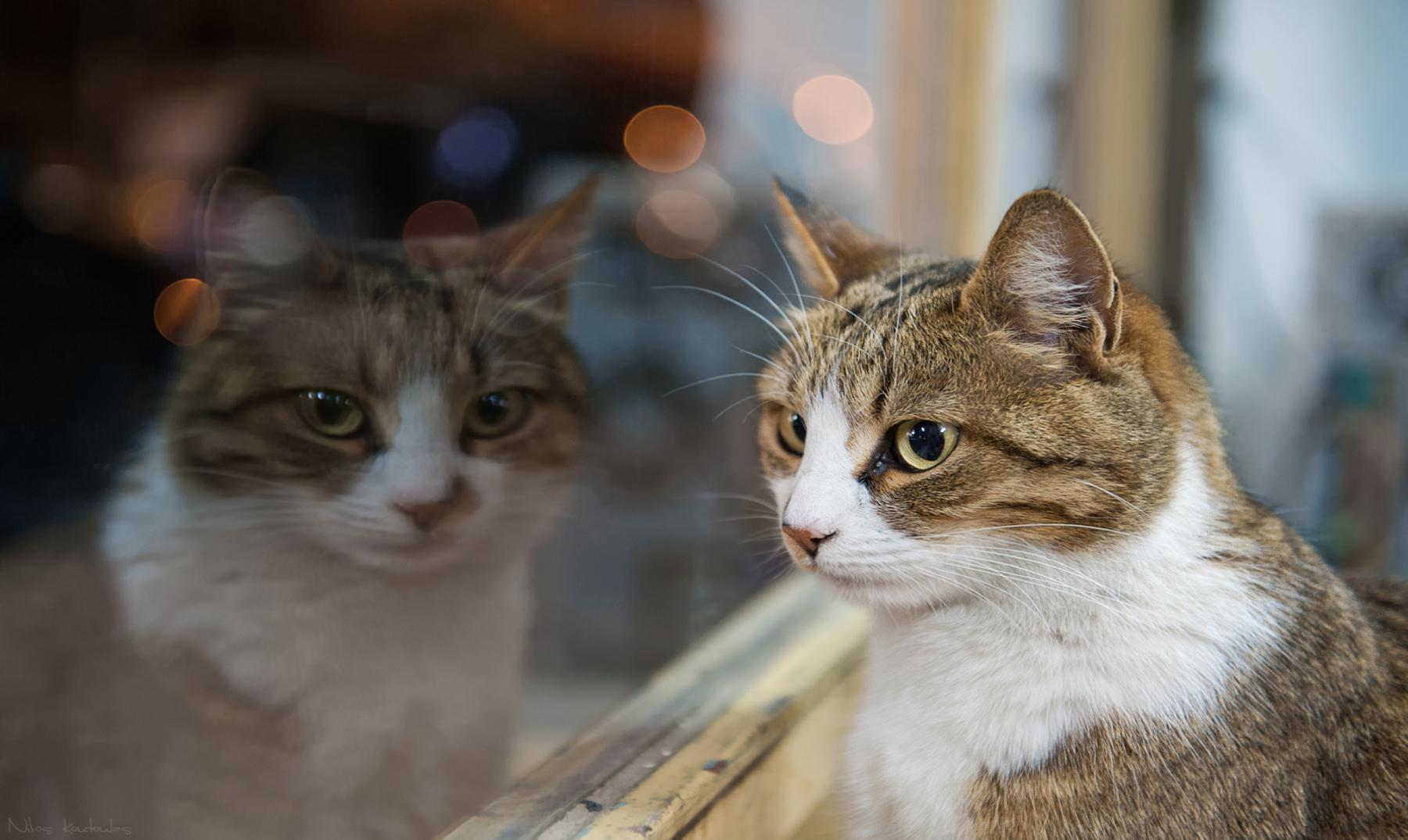 Óscar, el gato que presiente la muerte