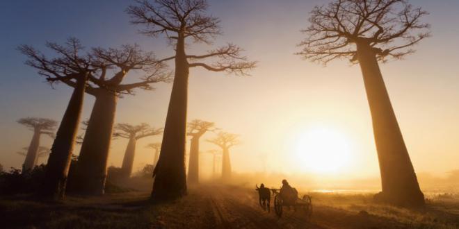 """El Baobab, ¿por qué le temía """"El Principito""""?"""