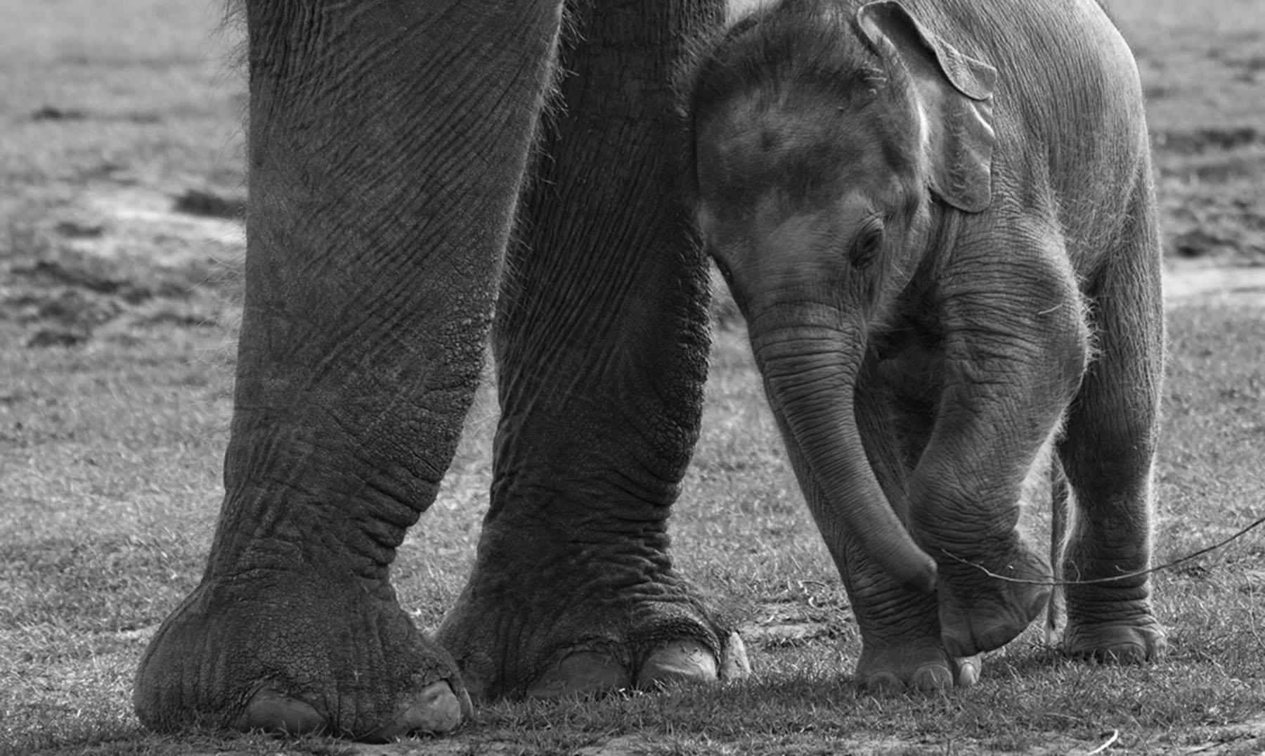 elefante bebé portada