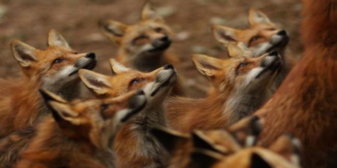 fox-village-japan-2_1800x1075_660x330