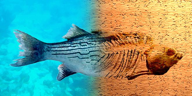 pez a punto de morir