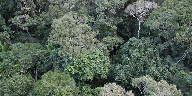 Vista aérea de la selva amazónica