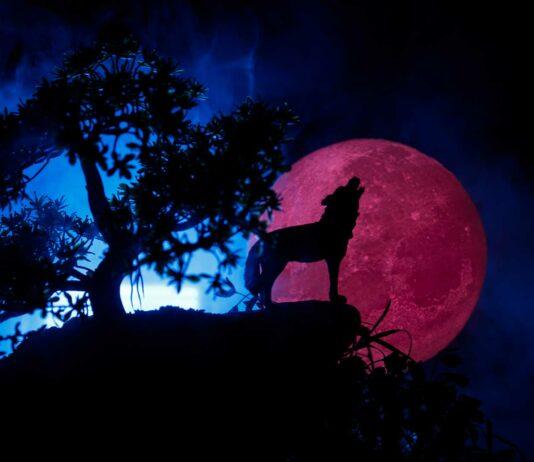 skoll y haiti los lobos