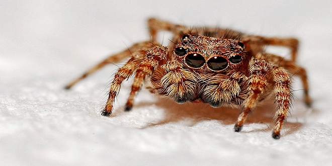 spider-564571_640