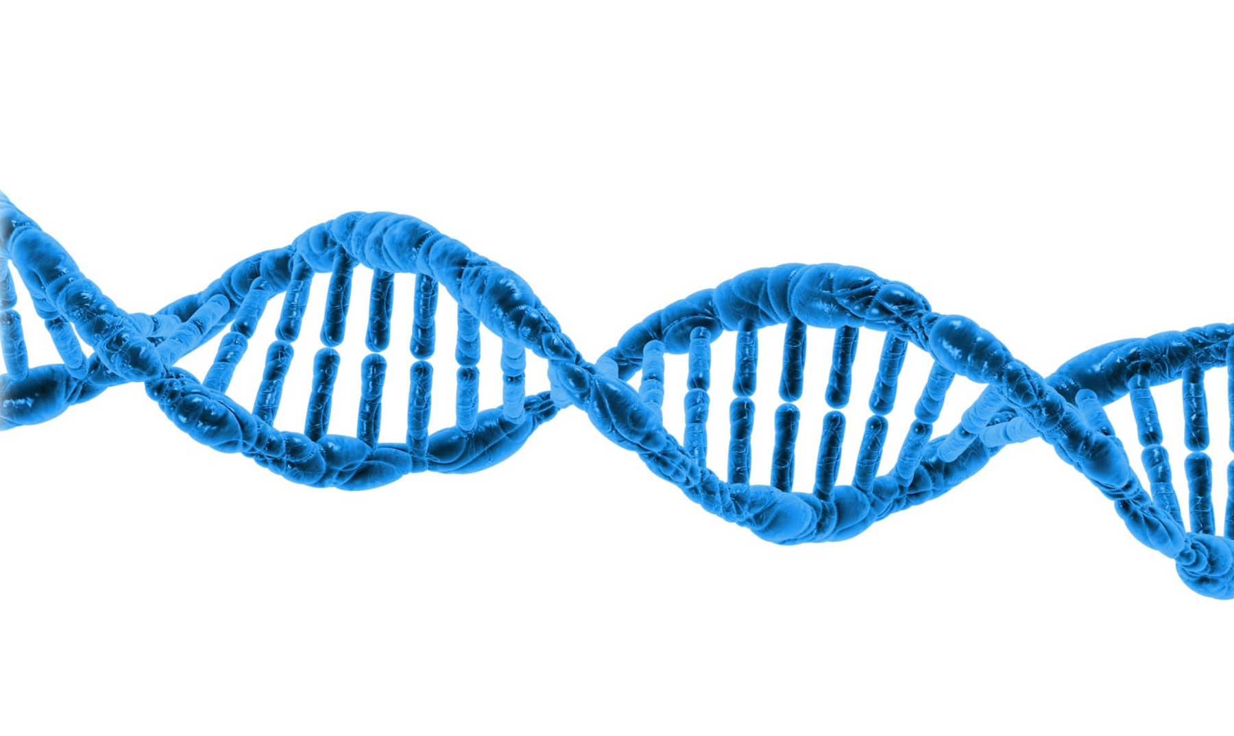 Telómeros: Los relojes de la vida