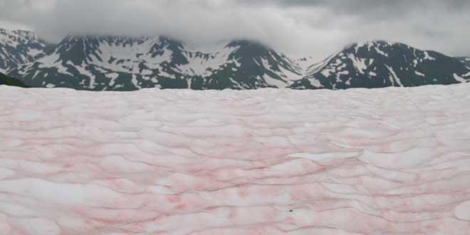 watermelon snow paisaje