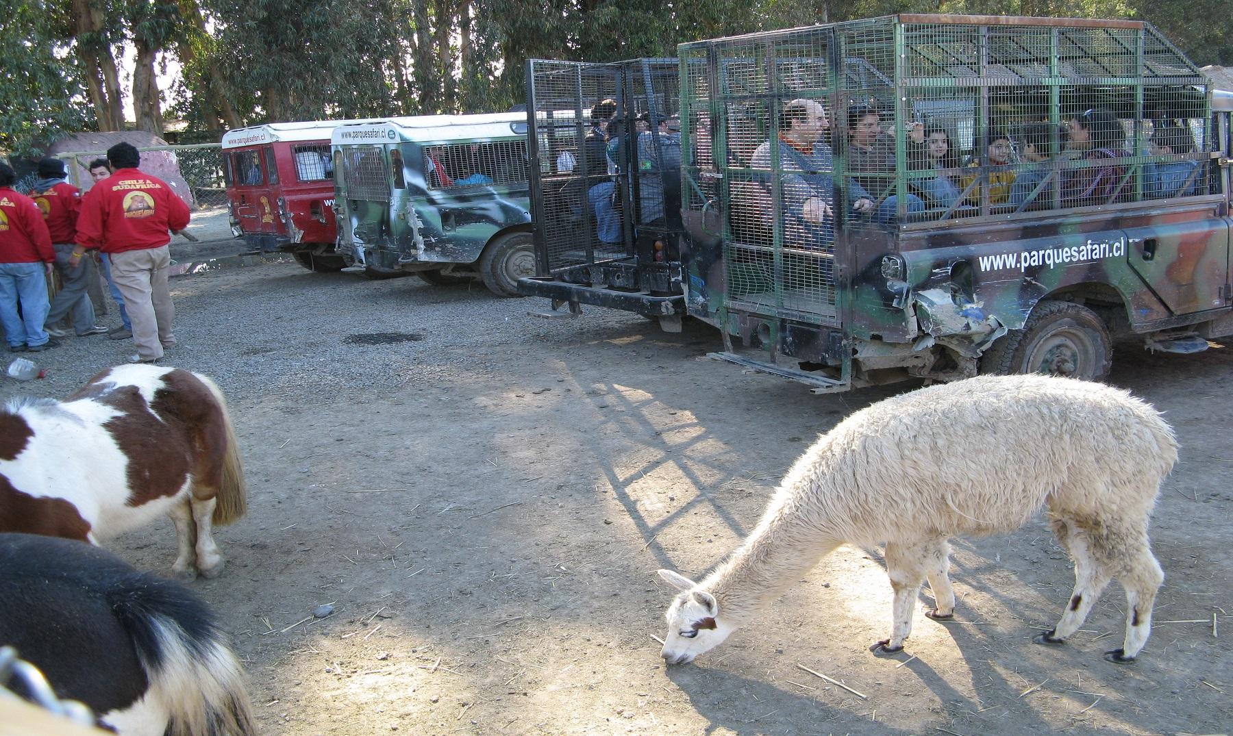 El Zoo donde los animales están libres y los humanos encerrados