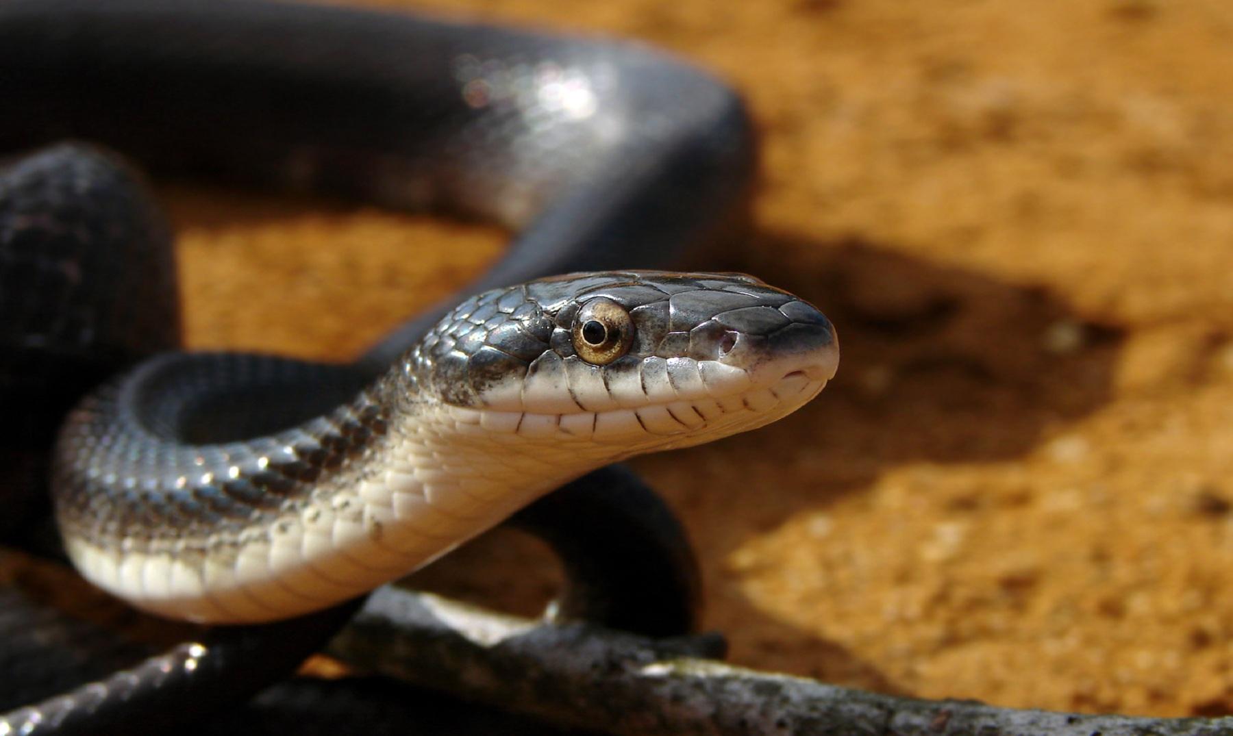 15 animales altamente letales