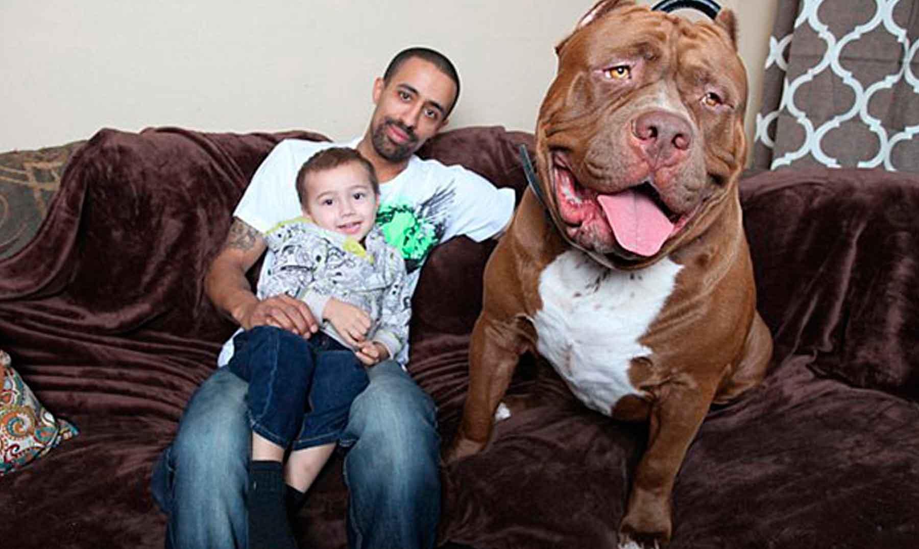 hulk el perro gigante de m s de 78 kg de peso. Black Bedroom Furniture Sets. Home Design Ideas