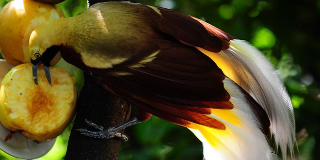 ave comiendo