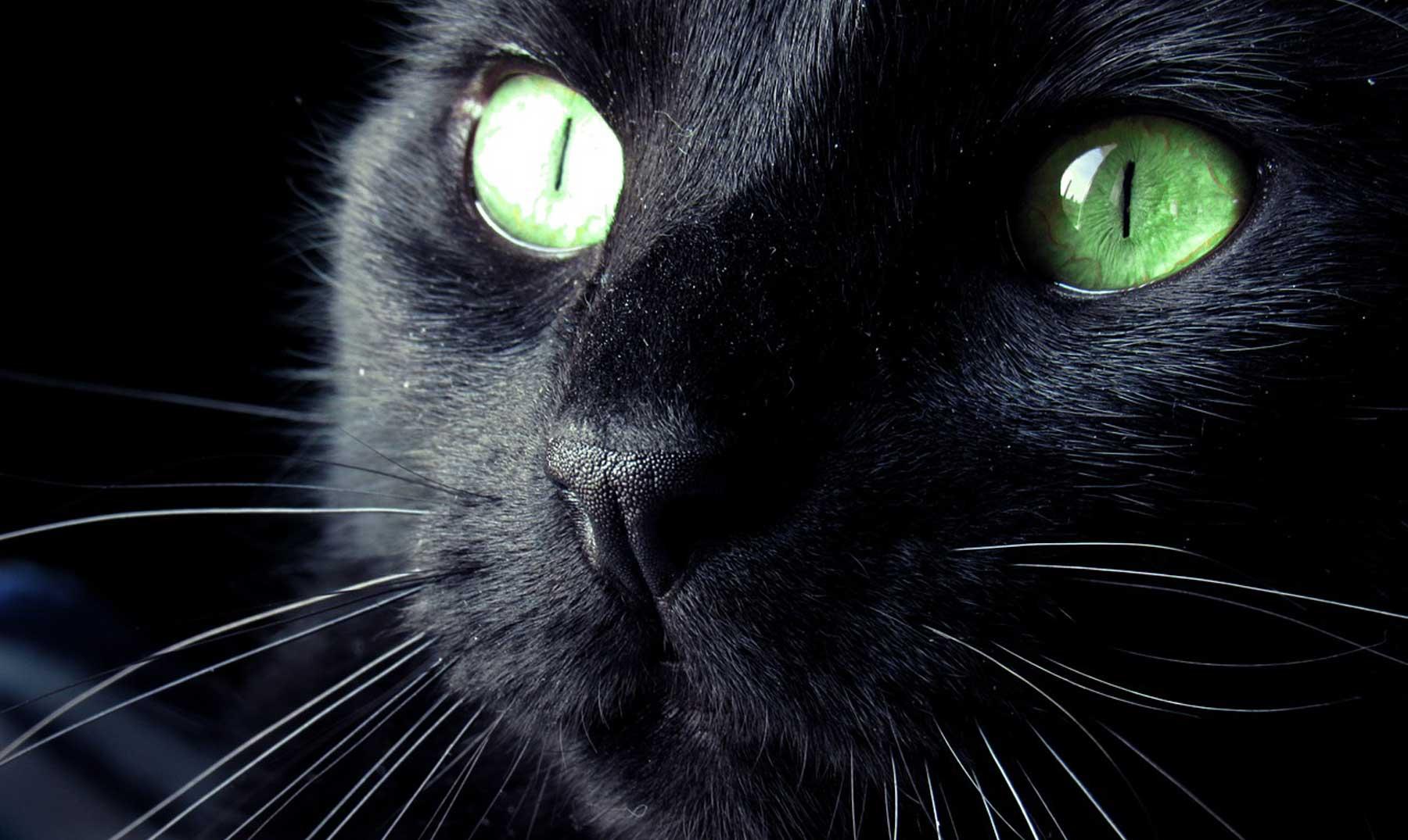 Historia de la superstición de los gatos negros