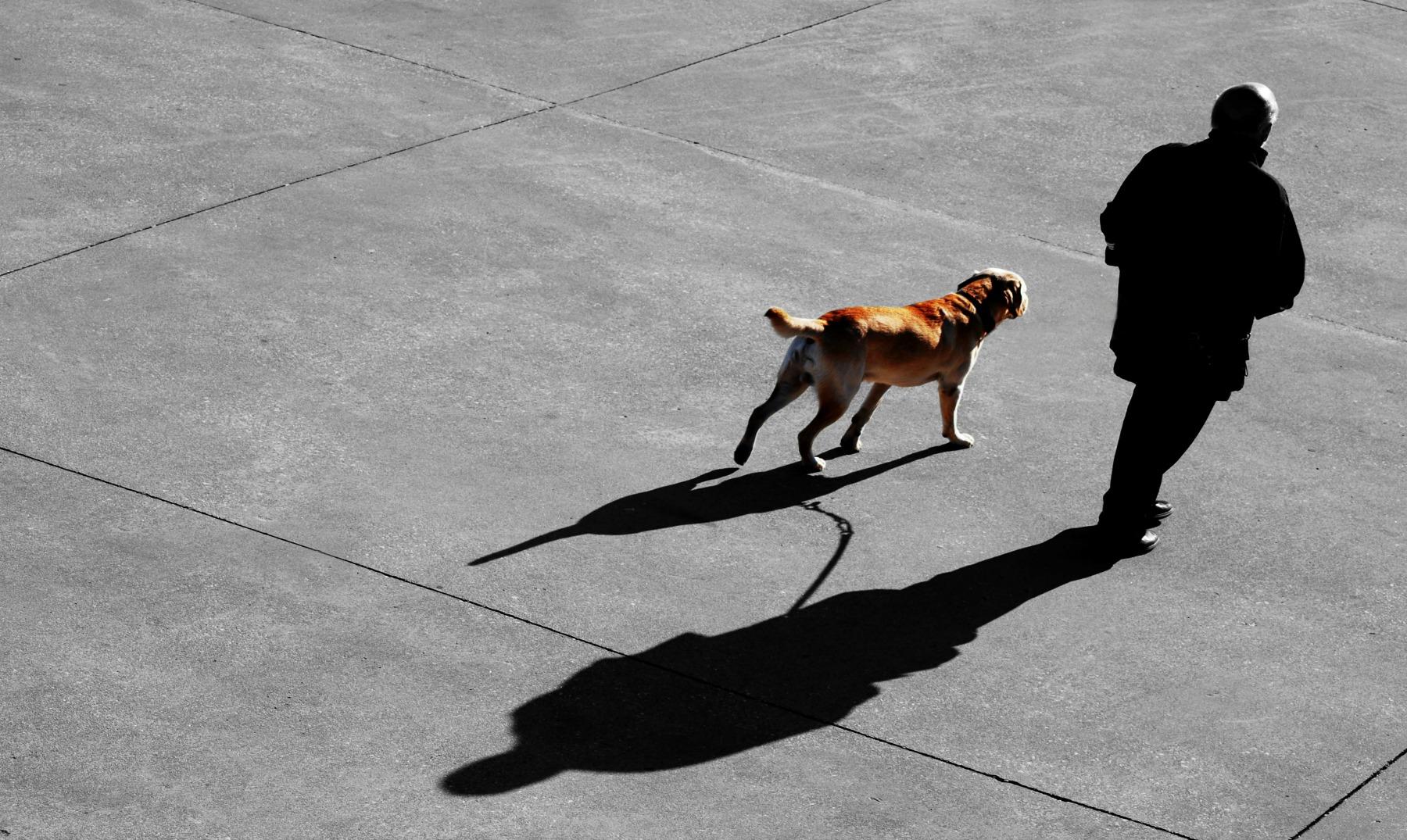 Los perros reconocen caras tristes y alegres