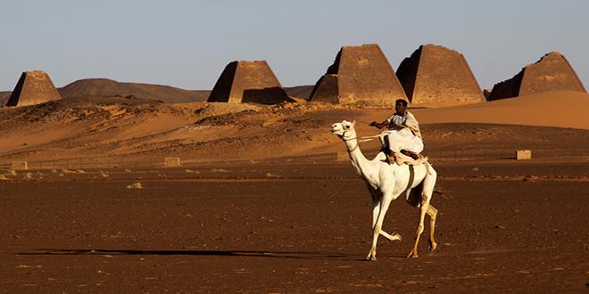 pirámides y camello