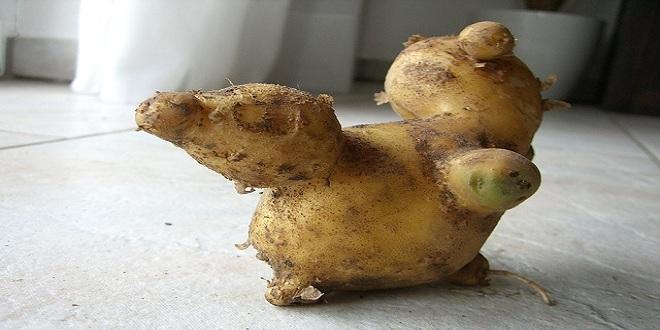 potato-433191_640