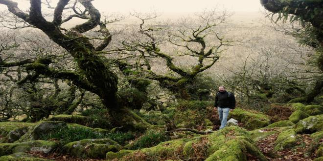 wistmans-wood-dartmoor1_660x330