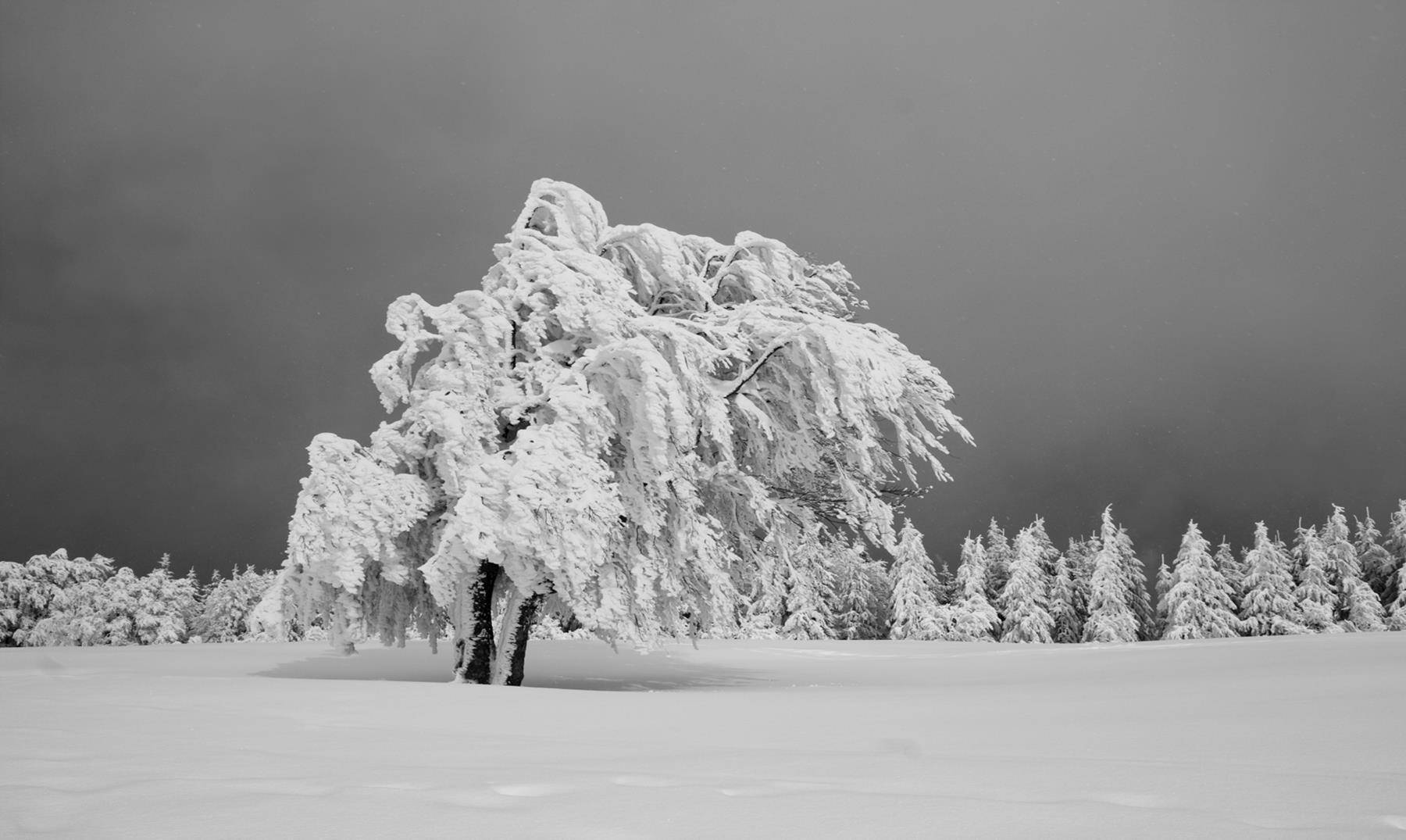 ¿Cuál es el pueblo más frío de la Tierra?