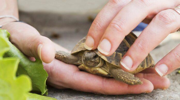 Cómo cuidar una tortuga | 7 cosas que debes saber