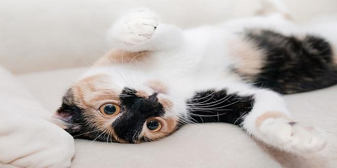 cat-649164_640