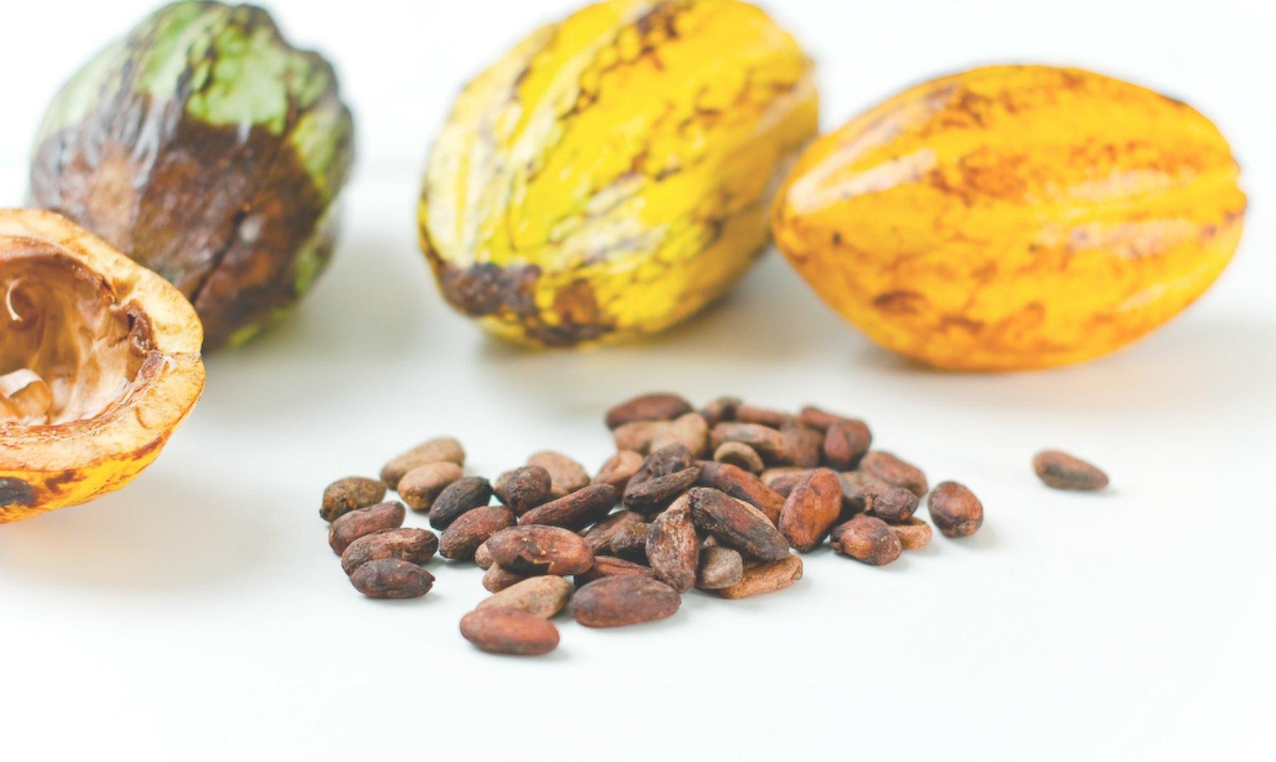 El cacao: ¿bueno para prevenir la Diabetes tipo 2?
