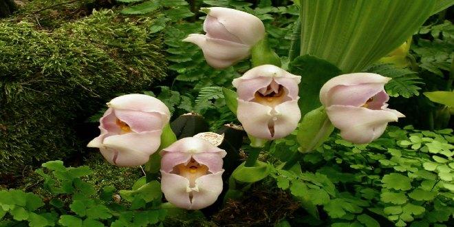 flor bebé