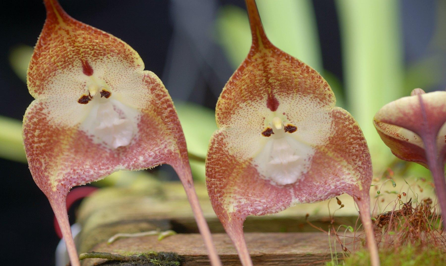 7 flores súper extrañas