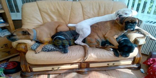 mi-perro-se-sube-al-sofa (Copy)
