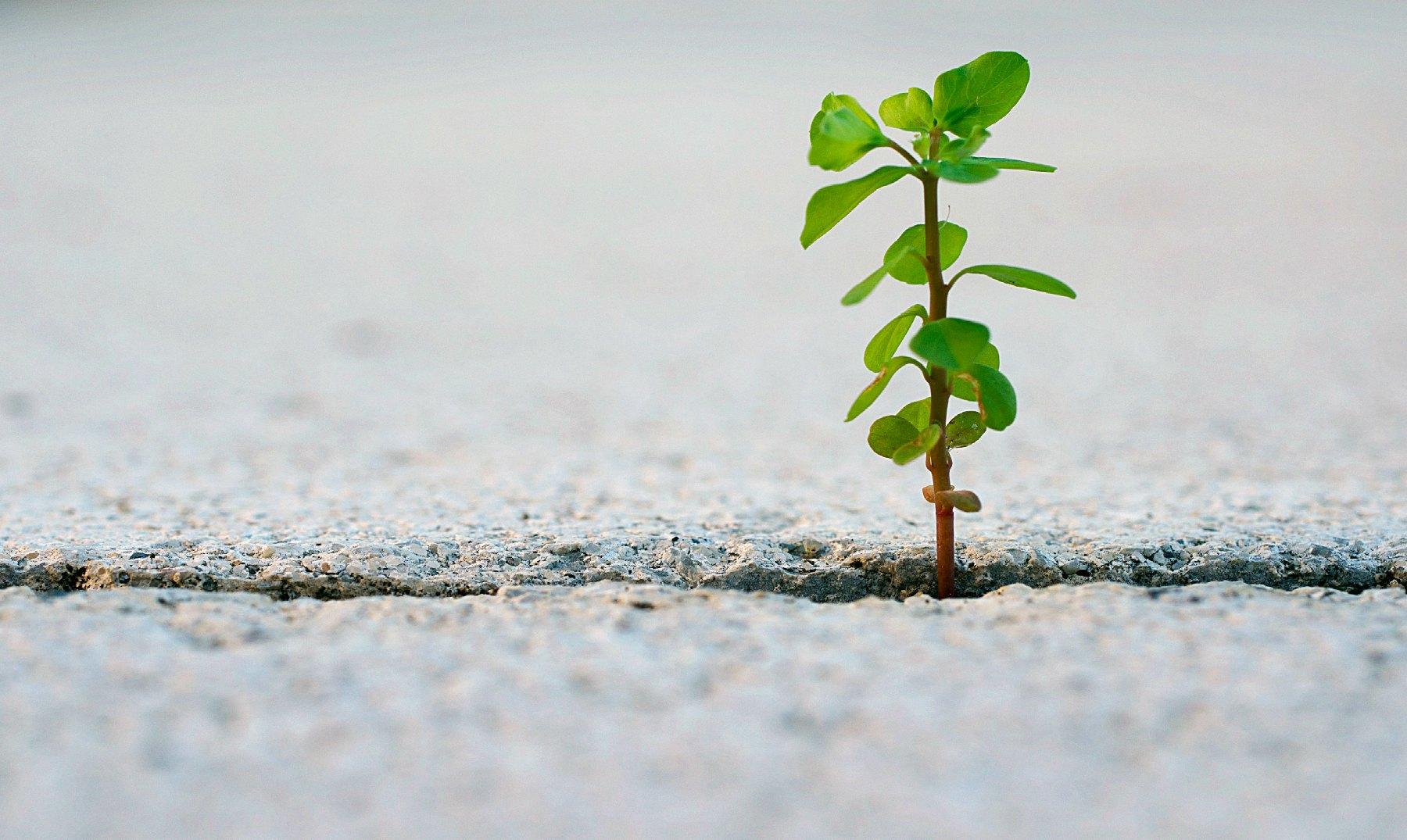 ¡Una planta creciendo en mi cuerpo! 3 casos reales
