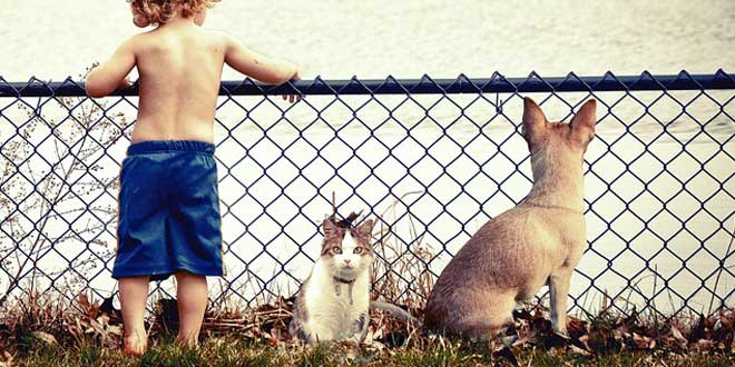 niño mascotas