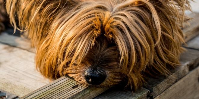 ¿Qué diría nuestro perro si pudiera hablar?