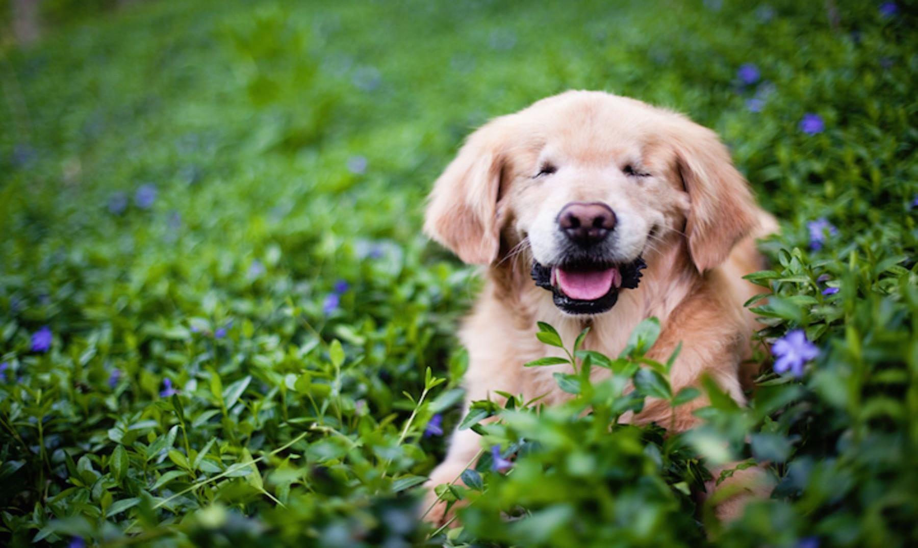 """Smily, el perro ciego que """"ofrece luz"""" a las personas enfermas"""