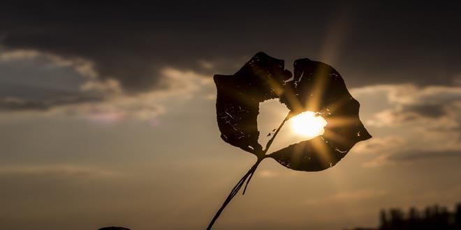 sun-622740_1280 (Copy)
