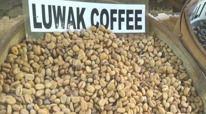 El carísimo café hecho de heces: Kopi Luwak