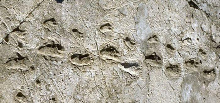 Las Huellas de Laetoli | Las primeras pisadas de la humanidad