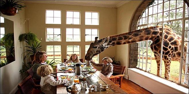 Hotel-Giraffe-Manor (Copy)