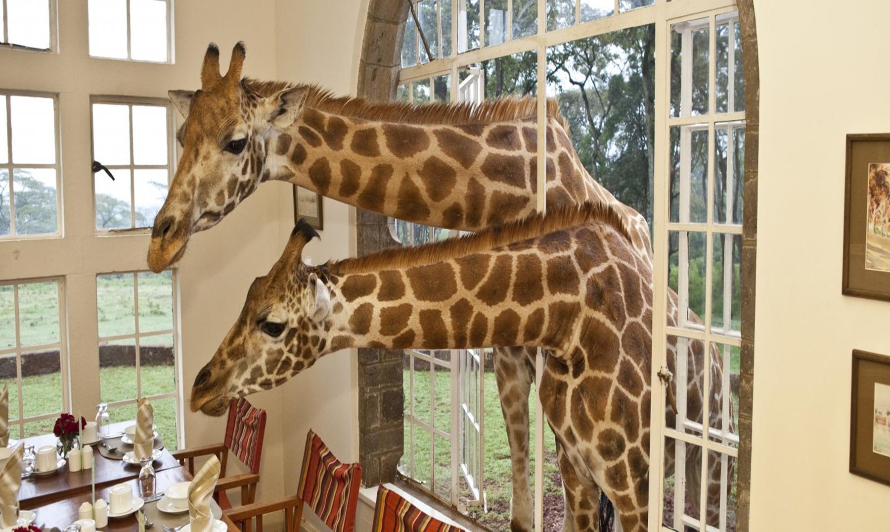 El hotel donde puedes desayunar con jirafas: ¡Precioso!