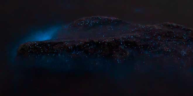 rocas bioluminisicentes