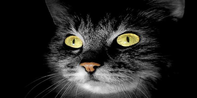 Gatos-fantasma-paranormales (Copy)