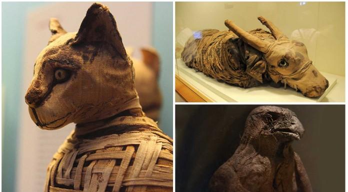 Las momias de animales en el Antiguo Egipto